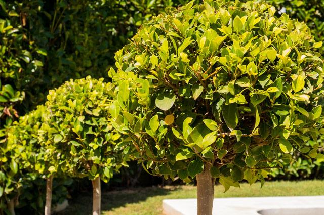 natura jardin jaime martinez